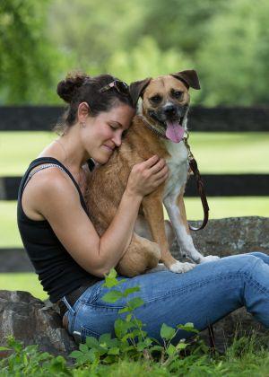 Browney Border Terrier Dog