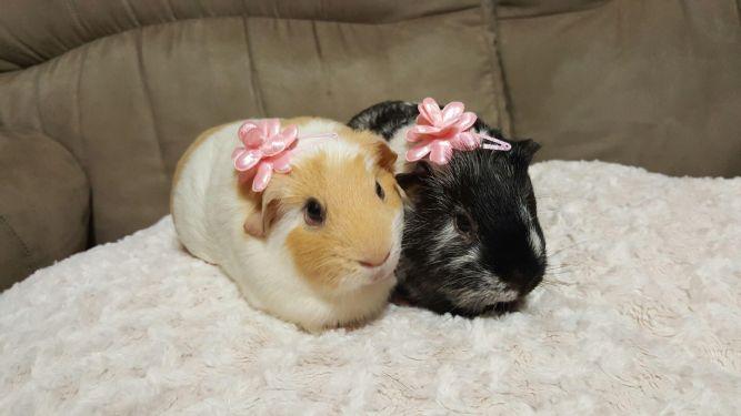 Nala and Harlequin