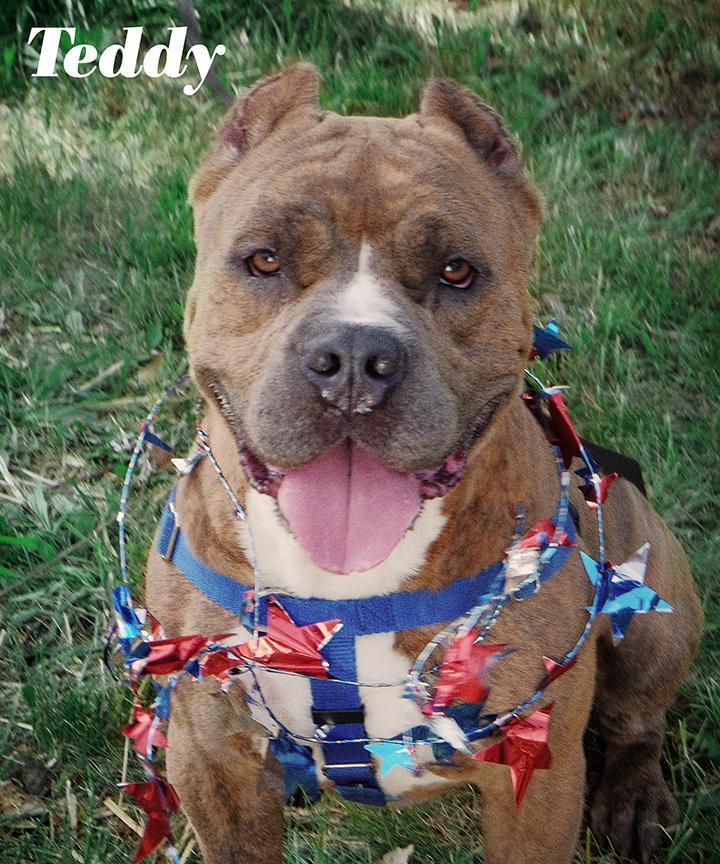 Teddy (Fun, Dog Friendly Boy, Great with Kids) 1