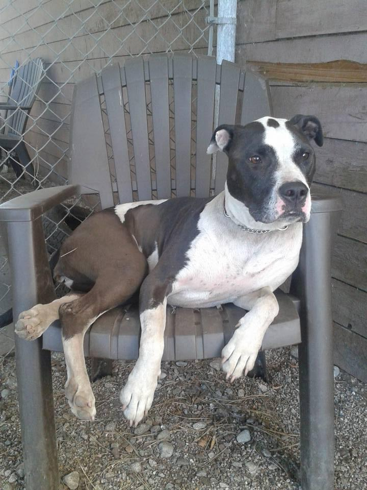 Paisley-FOSTERED!!!! 1
