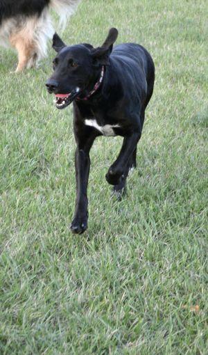 Allie- adoption pending