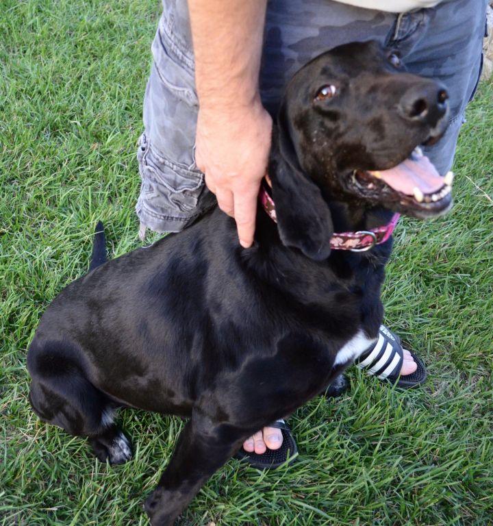 Allie- adoption pending 3