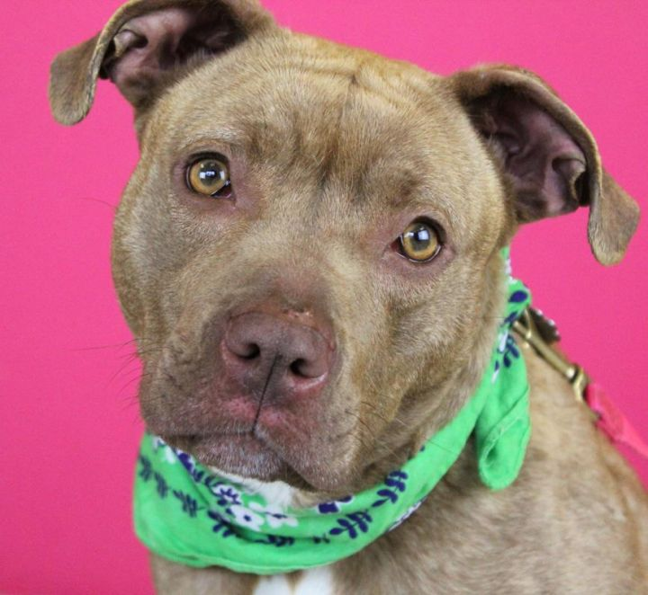 Pibble: Adopted! 1