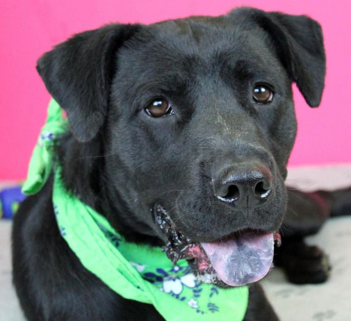 Sasha: Adopted! 1