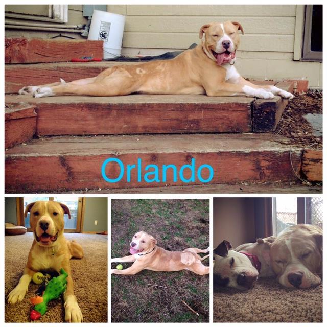 Orlando- GREAT 1st Dog-Fee Waived! 2
