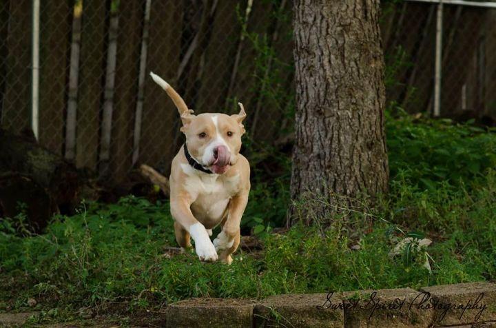 Orlando- GREAT 1st Dog-Fee Waived! 3