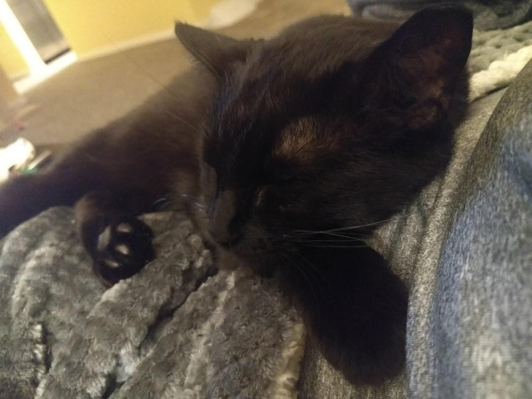 """Cat for Adoption – Purple Rain """" Black Squeakers """" Sponsored"""