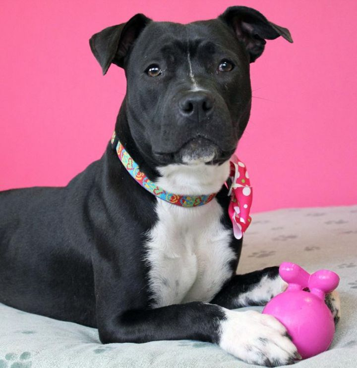 Mollie: Adopted! 2