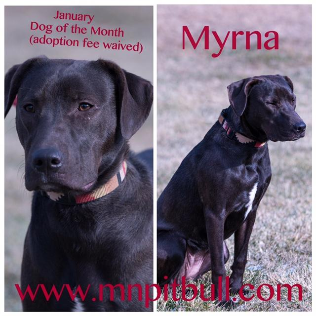 Myrna **adoption fee waived** 3