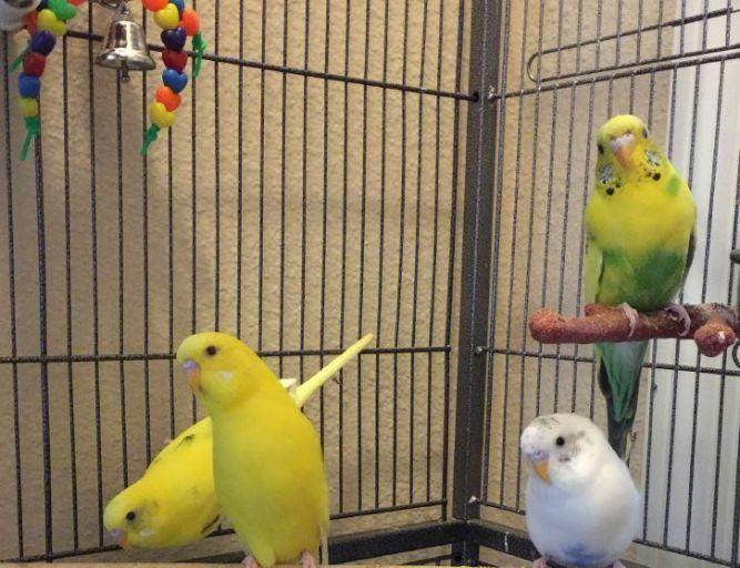 Huey, Dewey, Louie, & Donald