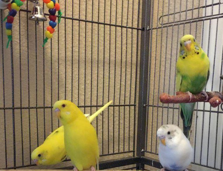 Huey, Dewey, Louie, & Donald 1