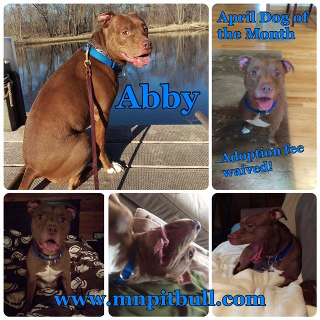 Abby **Adoption fee waived**