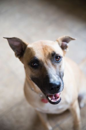 Hello my name is Tink My shelter mate Etta and I were rescued from the shelter in honor of a