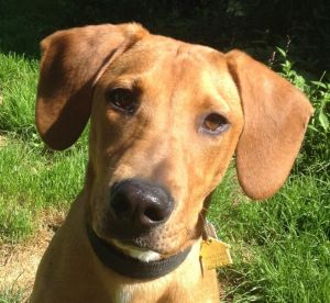 Jenny came from a high-kill shelter in GA She was found as a stray running around with another pup