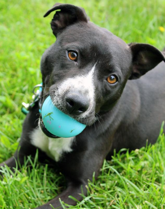 Marvin: Adopted! 1