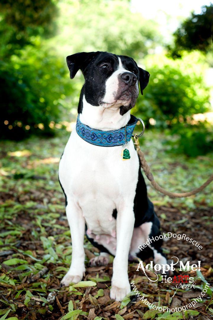 BELLA perfect city dog! 1