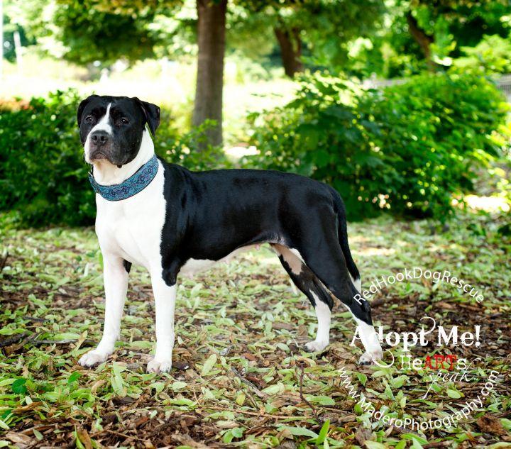 BELLA perfect city dog! 3