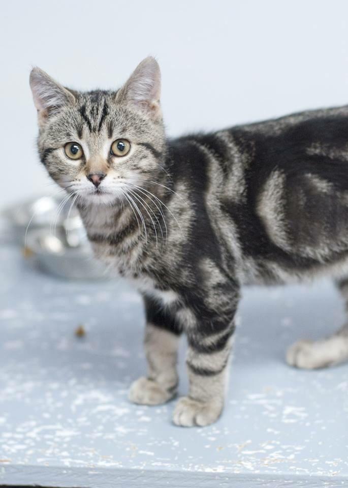 Kitten (ZIPLIC) 1
