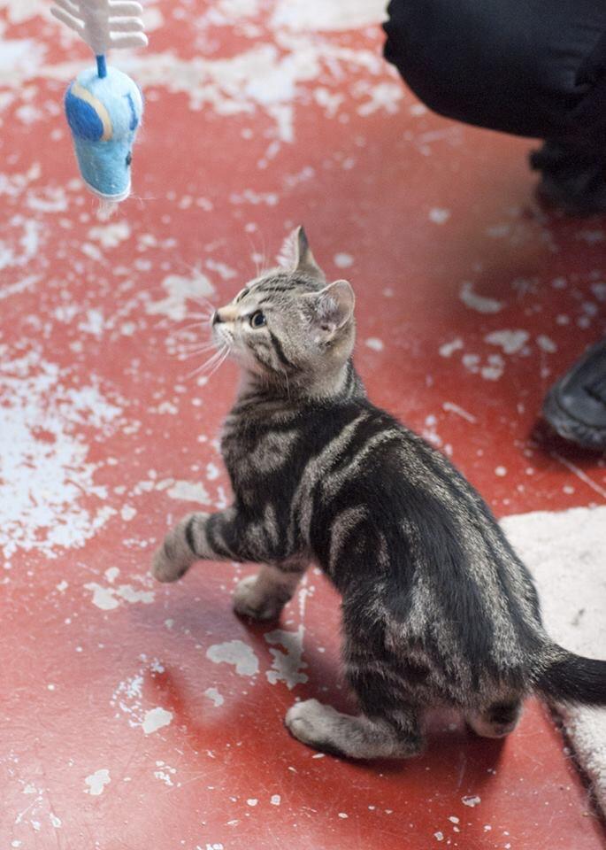 Kitten (ZIPLIC) 3