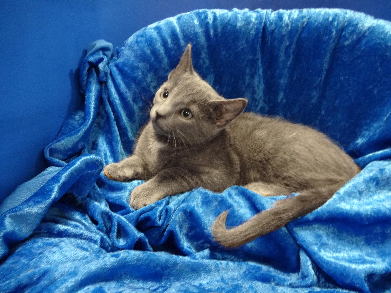 Cat for Adoption – Nora near Gainesville FL