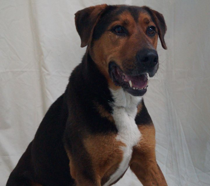 Petey (136604), an adopted Shepherd Mix in Newark, NJ_image-1