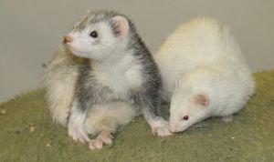 Fritz and Jody