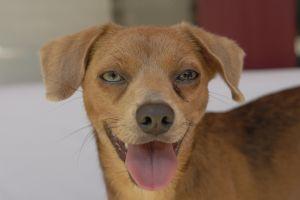 Jasper Terrier Dog