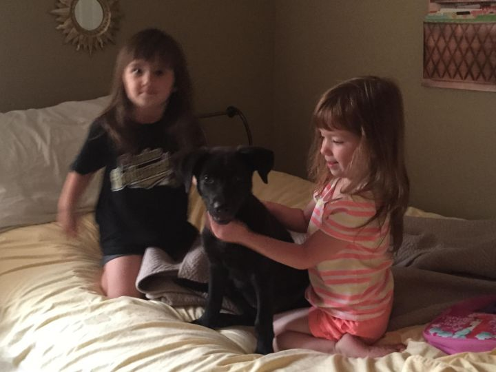 Madeline, an adopted Labrador Retriever in Gurnee, IL