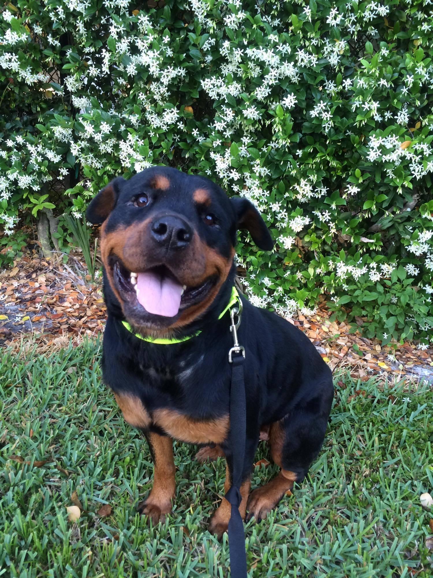 Dog For Adoption Minnie Near Land O Lakes Fl Petfinder