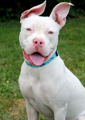 Skye: Adopted!