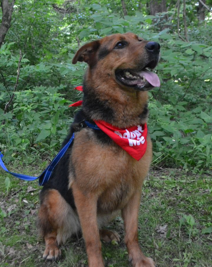 Dog For Adoption Jade A Rottweiler German Shepherd Dog Mix In