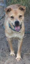 Shepherd Dog: Brownie