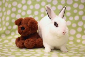 Please meet Angelina Angelina is a strikingly beautiful medium-sized Hotot who has been waiting for
