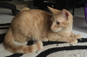 Estimated birth date May 2015 If you are interested in Ginger please contact