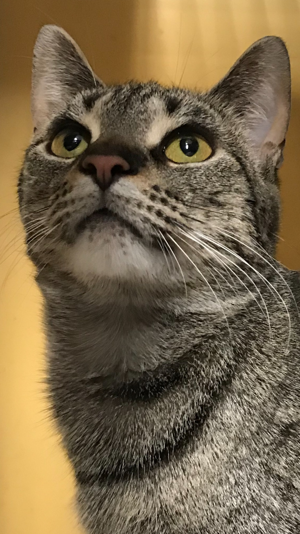 Daisy Sweets 1214 Special Fee Fiv detail page