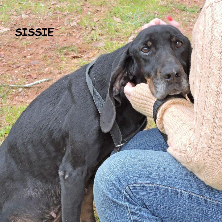Sissie 3