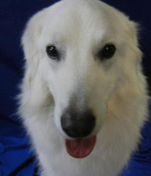 Hi my name is CHUNK and Im a neutered male about 3- 12 yrs old Im a terrific looking dog