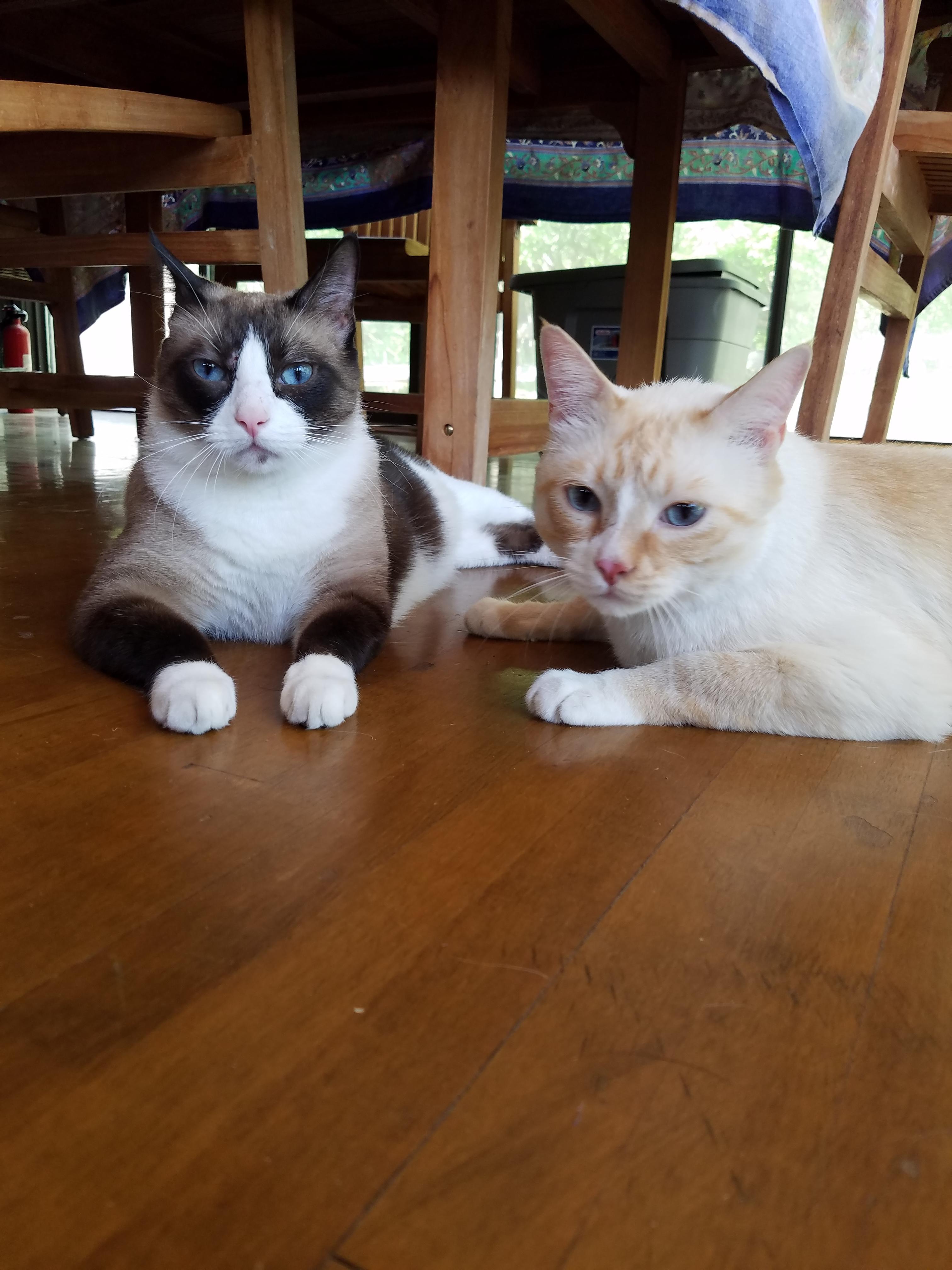Jinx & Mojo