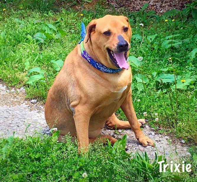 *SPONSORED* Trixie