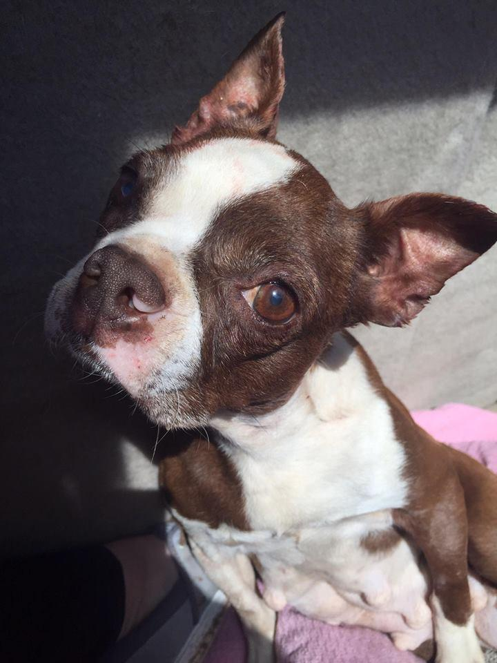 Mandy-Adopted! 2