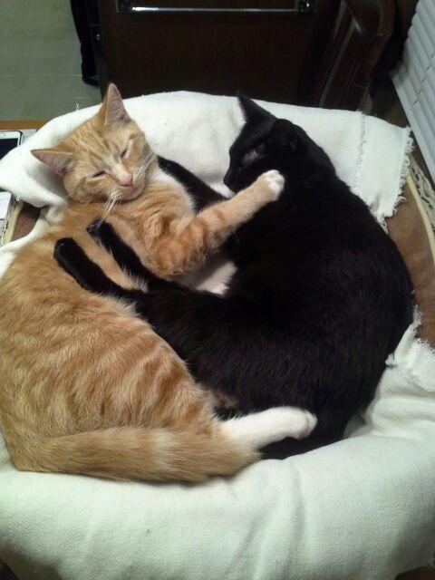 Valentina and Max (Bonded Pair) 1