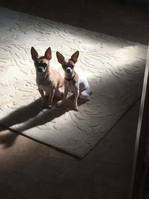 Mia and Bella