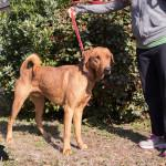 Wiley, an adoptable Hound in Savannah, GA