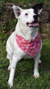 Terrier Dog: Peaches