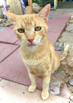 Kitty-Cat, AKA, K.C.