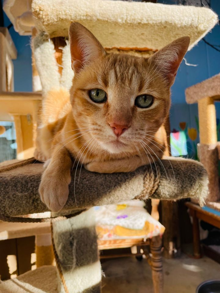 Kitty-Cat, AKA, K.C. 2