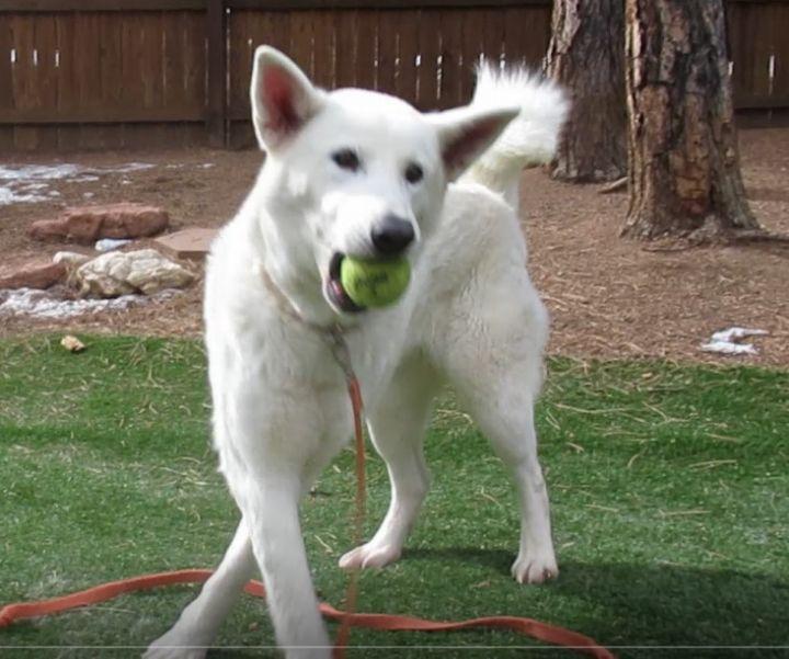 Dog for adoption - Tilly, a German Shepherd Dog & Husky Mix