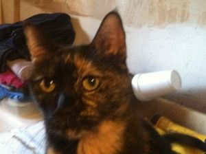Little Girl is very affectionate and gives kisses She likes petting and cuddling Tested negative f