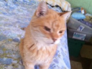 Bivi is very affectionate and gives kisses He likes cuddling and sleeping and is a very calm cat T