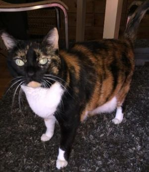 THIS IS A COURTESY LISTING - This cat is located in NJ but the owner is willing